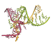 RNA FRABASE 2.0